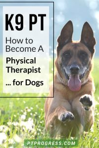 physical therapist dogs