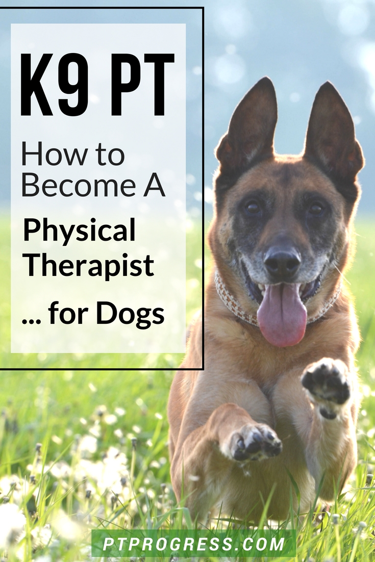 how to become a physical therapist for dogs