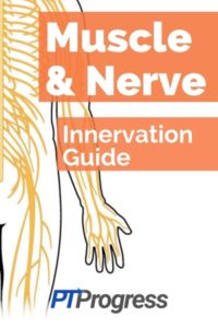 Muscle and Nerve Guide: The Ultimate Muscle Innervation Chart